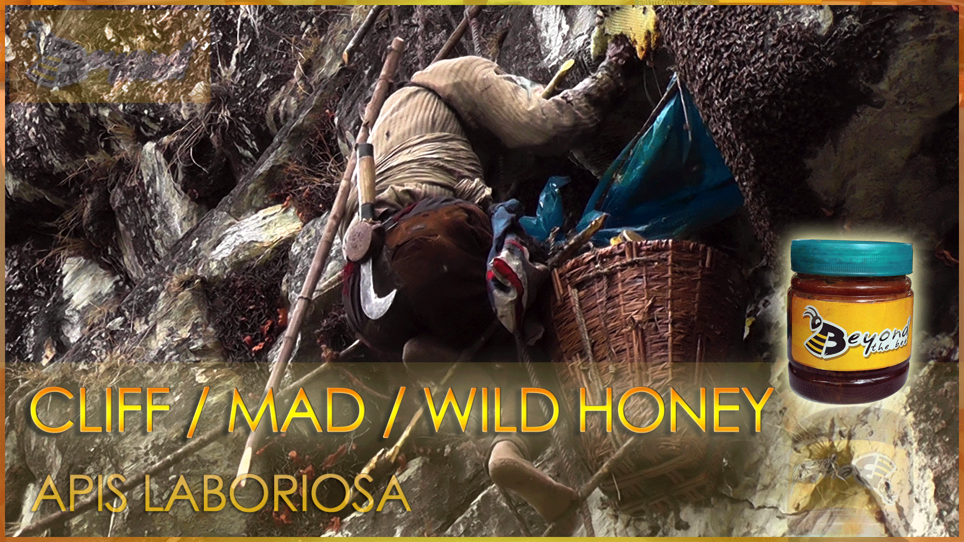 Honey Hunter busy taking out the Wild Honey from the mountains